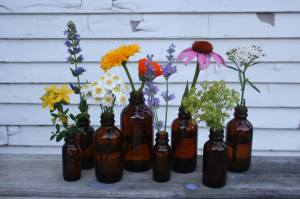 Missoula Medicinal Flowers grown locally in medicine bottles