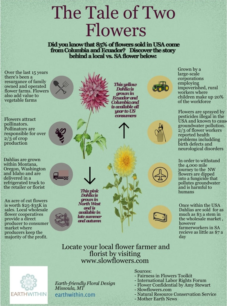 Slow Flowers. An infographic sharing the social and environmental difference between a flower grown in Montana versus a flower grown in Columbia