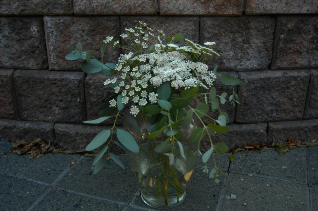 eucalyptus, yarrow, queen anne's lace in vase