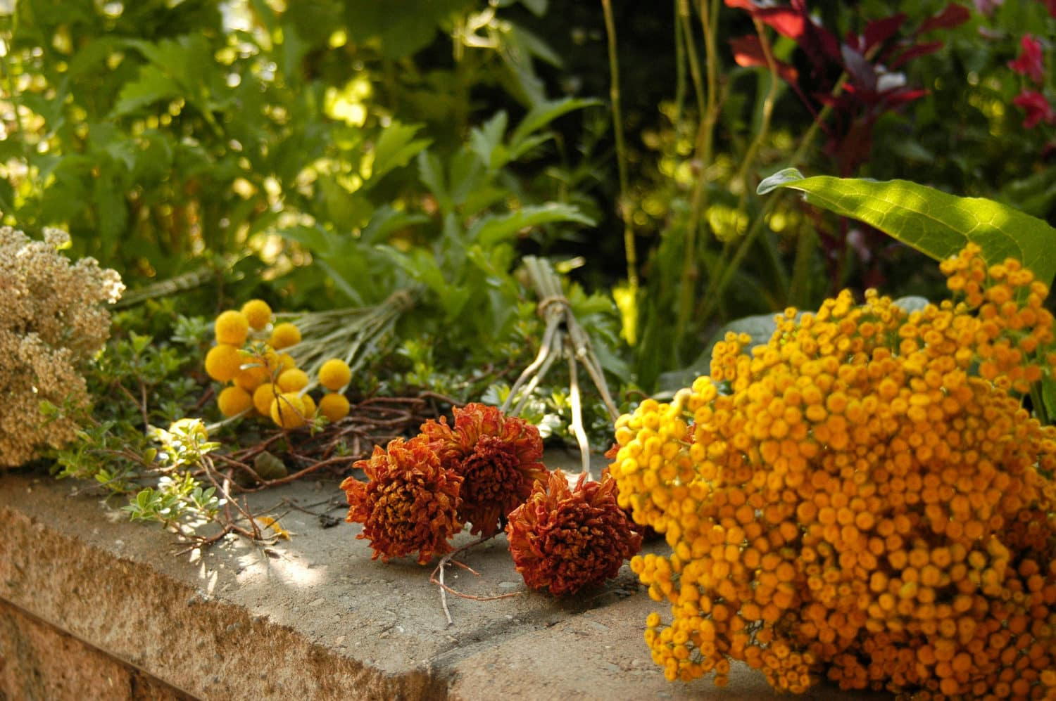 assorted yellow and orange flowers for DIY Dried Flower Bouquet