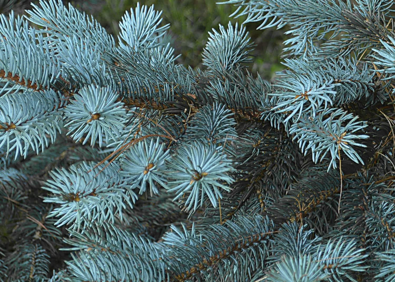 winter wreath materials missoula