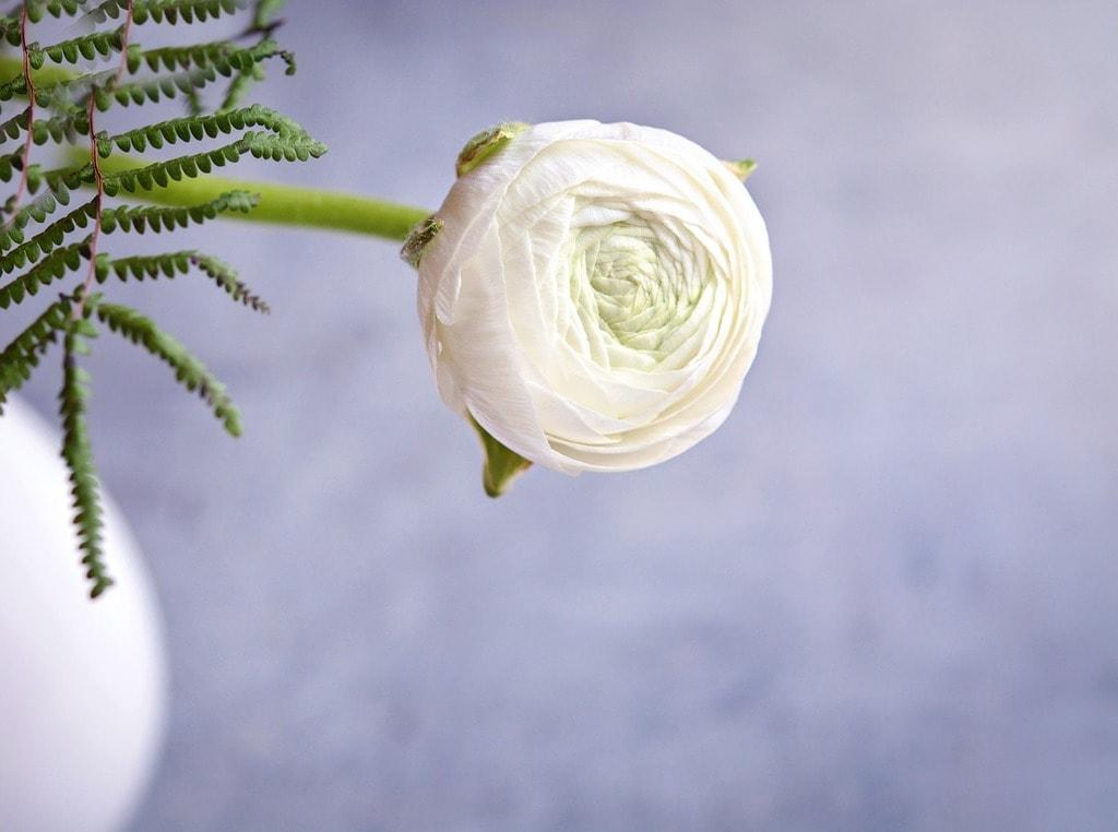 Ranunculus Bridal Bouquet Flower Meanings
