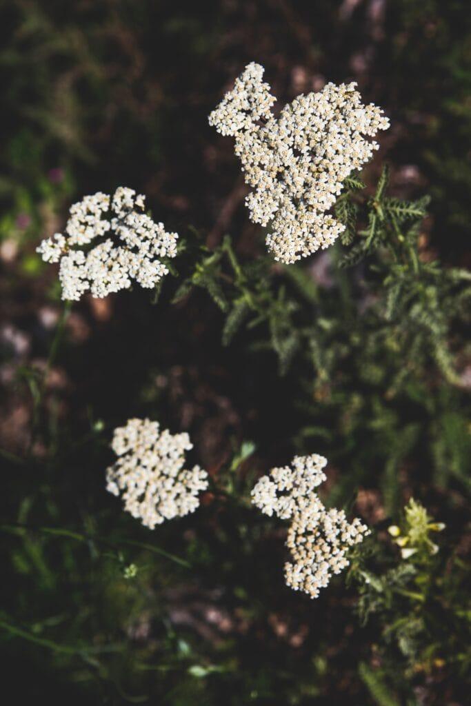wedding florist Whitefish Montana